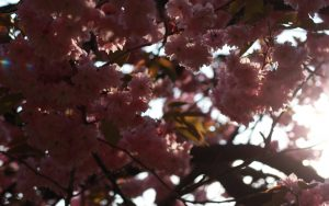 cropped-2011-04-20-0001.jpg